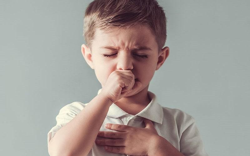 Sâm bố chính chữa trị các bệnh về đường hô hấp